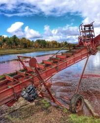 cranberry-harvest